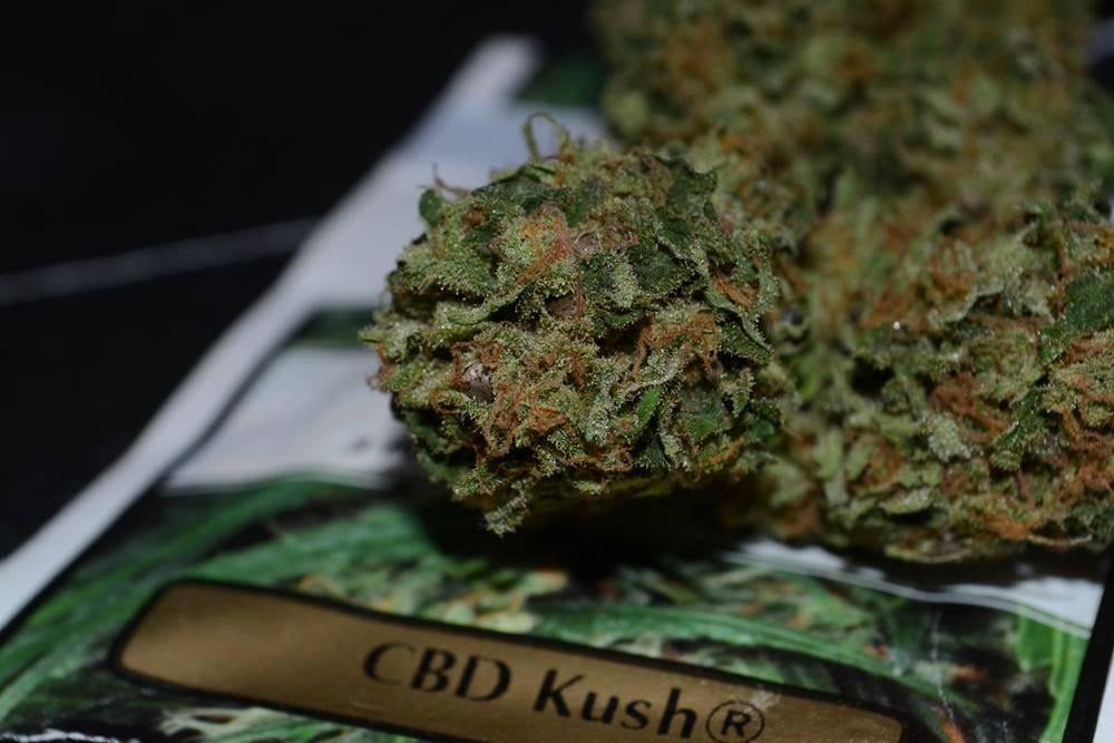 CBD Kush semillas CBD-rich.org